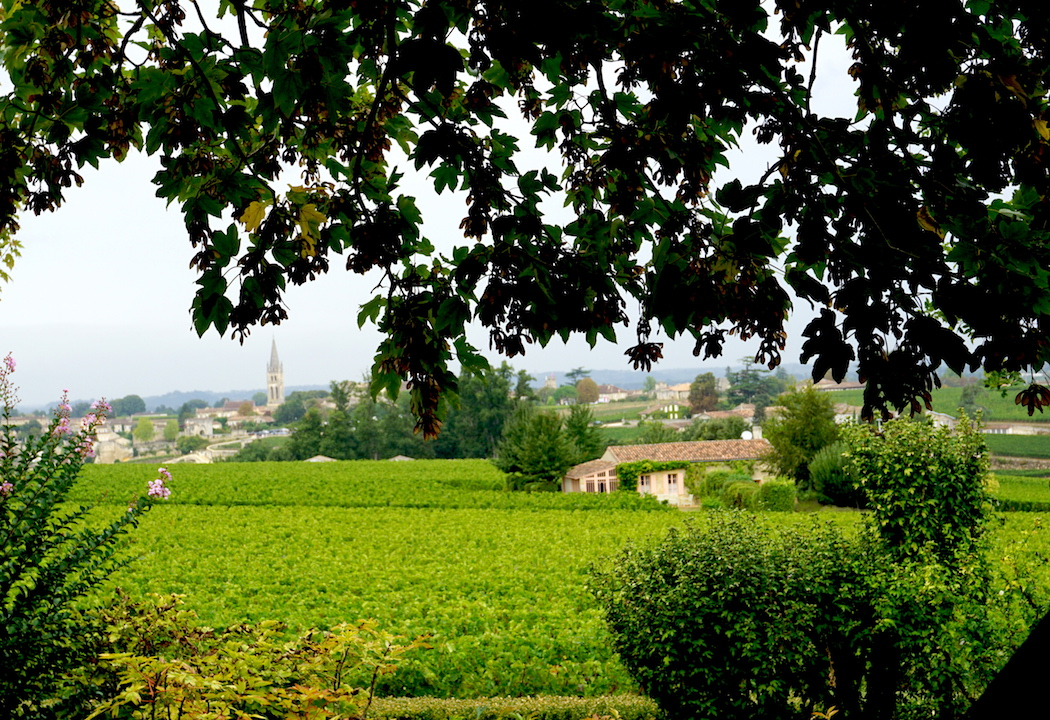 The vineyards of Chateau Troplong Mondot